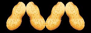 peanuts-TPs